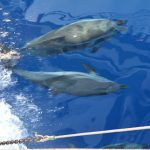 Dolphins, the Aegean sea