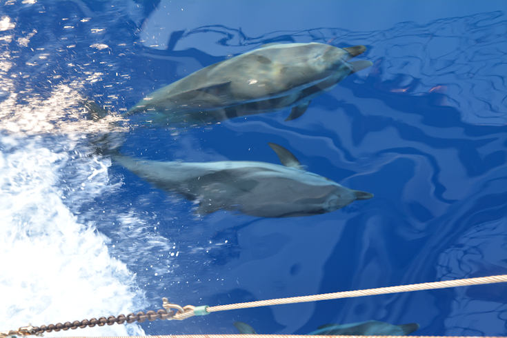 Dolphins, the Aegean sea.
