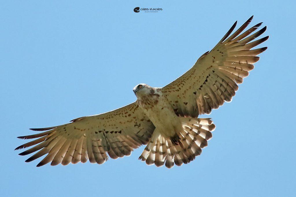 Bird watching tour of Greece. A birders must.