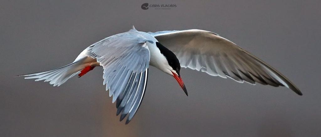 Birds in Greece. Birdwatching Tour of Greece